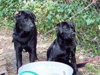 Must rehome to loving home - 4 year old male & female