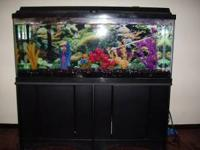 Beautiful 75 gallon fish tank for sale $250 moving and
