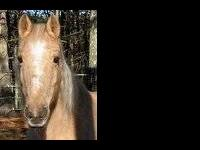 Mustang - Breezy - Small - Adult - Female - Horse
