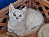Mustang's story Adoption fee is $75, this kittens