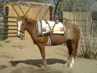 Mustang - Quigley - Medium - Adult - Male - Horse