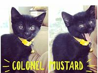 Mustard's story Meet Mustard! This sweet girl just