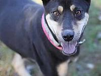 My name is Allegra! I'm being cared for by: Lee County