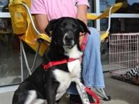 Cooper. Animal ID: 22769010. Types: Dog. Breed: