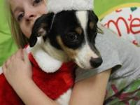 Victoria. Beagle Mix Baby Female Small. Buddies For