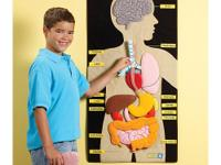This interactive cloth wall chart helps children learn