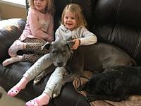My story Mya is a 7 year old Pitbull terrier, she