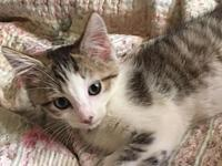 Myers's story Myers is a sweet and active kitten. He