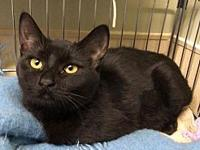 Myla's story I'm a loving little kitty looking for my