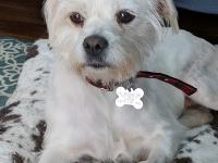 Myla is a darling terrier mix . She is thought to be 18
