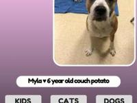 Myla's story Hi, hoomans! I am Myla, a 6 year old