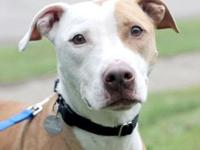 Myles's story Handsome cuddlebug looking for someone