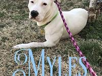 Myles's story All our animals leave at a minimum of 12