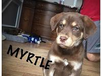 Myrtle's story If interested in adopting, please visit
