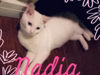Nadia is an all white short hair with blue eyes. She is