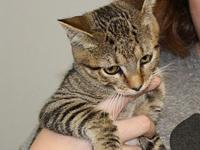 My story Nadia is a 4 month old female. Shee and