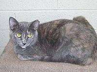 Nadia's story Nadia and Natasha were feral. Still shy,