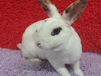 Nala is sure to make you smile - shes a lovely rabbit,