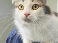 Nala is a very sweet cat who loves to get attention,