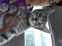 Nala's story 10wks old very friendly Gray Tabby girl