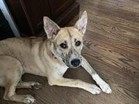 Nala's story Nala is an 8 month old Shepherd mix who is