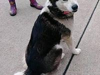 Nala's story Nala is a 1 1/2 year old black and white