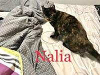 My story Nalia is an adorable young (9mo) speedy kitty