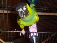 I have a Nanday Conure parrot for sale don't know if