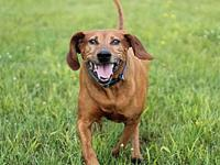 My story Hi! My name is Nani! I'm a hound/vizsla mix,