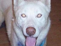 Nanook's story You can fill out an adoption application