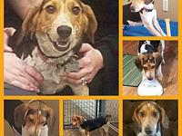 My story Naomi is an approximately 2-3 year old Beagle.