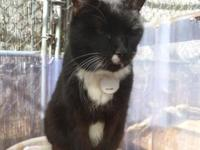 Naomi, a very loving senior cat, was relinquished by