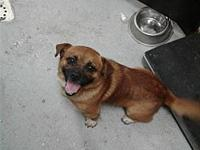 Napoleon's story Fayette County Animal Control Center