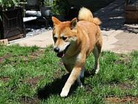 Nariko's story Nariko is a 3.5-year-old female red