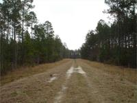 65 acre tract located between Nashville and Valdosta on