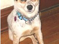 Natasha's story Natasha is a  8year old Cattle Dog