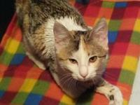 Natasha is just about 8 months old and was rescued from