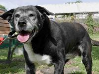 Natasha is a chill dog lover's dream! This affectionate