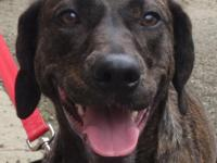 ADOPTION PENDING!!  Hi there! My name is Nation, I am a