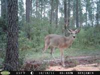 NC DEER HUNTING AT IS BEST COME OUT AND JOIN US ALL