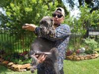 I have a 3.5 month old baby , Neapolitan Mastiff for
