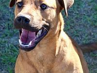Nebula-URGENT's story We do not euthanize any dogs,