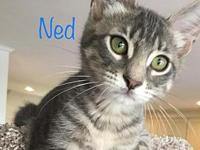 Ned's story C1806039 -- Ned is 5 months old, neutered,