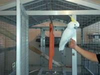 6 birds - 5 cages - Male Triton Cockatoo - Male Yellow