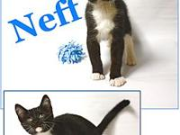 Neff's story Neff is another kitten available for