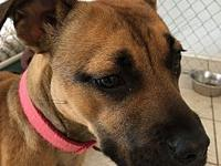 Nell's story Nell is a young boxer mix who is extremely