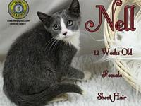 Nell's story You can fill out an adoption application