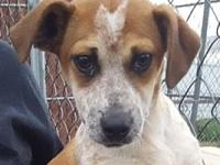 Nellie's story Nellie is a gorgeous Heeler mix pup who