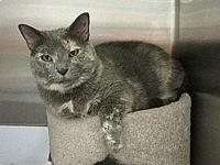 Nellie's story Nellie is a stunning dilute Tortie with
