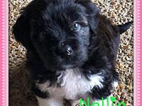NELLIE's story Nellie is approx 8 weeks old. She is
